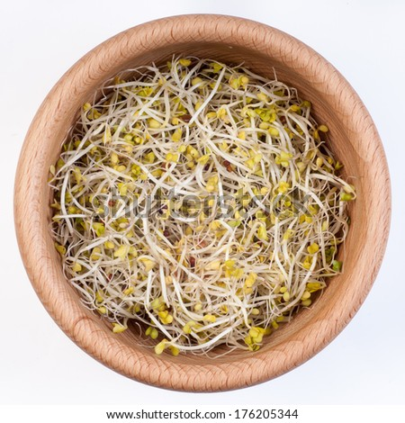 Broccoli sprouts - stock photo