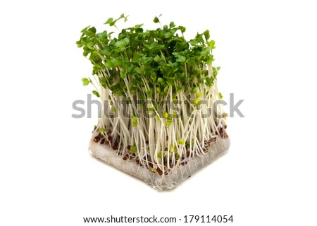 Broccoli Sprouts-Brassica oleracea, This image is available for clipping work.  - stock photo