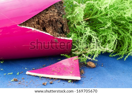 Broken flower pot with a plant inside - stock photo