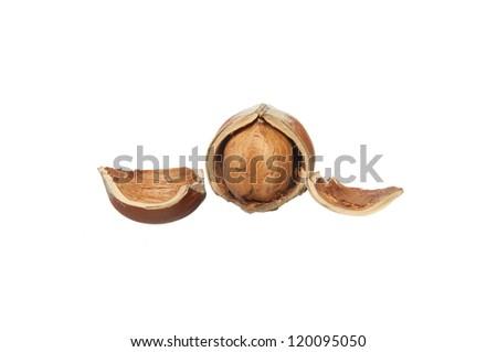 broken hazelnut with peel isolated on white background - stock photo
