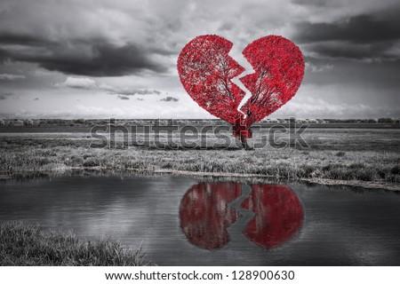 Broken heart tree. Black and white - stock photo