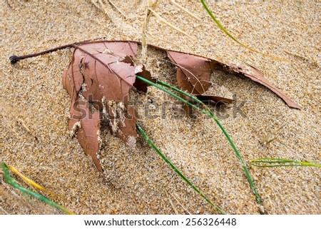 Broken leaf from a tree partially buried in the sand - stock photo