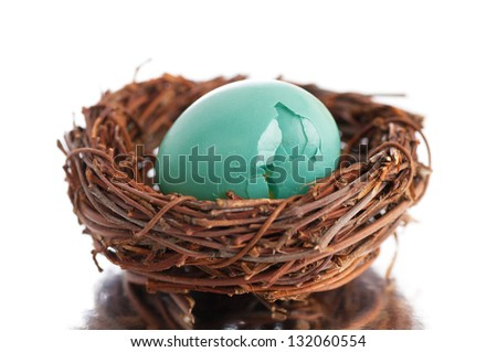 Broken Robin's Egg in Nest on Reflective Surface with White Background - stock photo