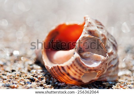 Broken sea shell on the beach - stock photo