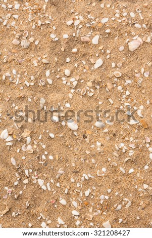 Broken seashells scattered on beach - Overhead view from the top of broken seashells of various sizes, shapes, patterns and colors lying scattered on a tropical beach.