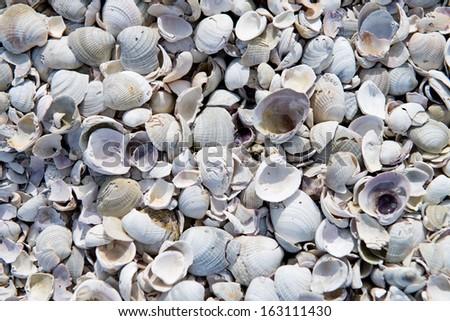Broken shells on beach as background - stock photo