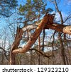 Broken tree - stock photo