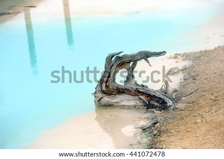 Broken tree sits in aqua water of Palette Springs in Norris Geyser Basin, in Yellowstone National Park. - stock photo