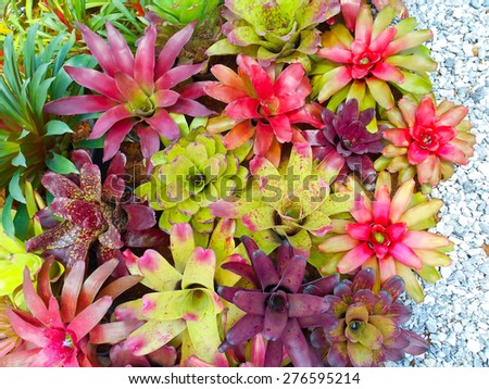 Bromeliad garden,thailand - stock photo