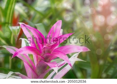 Bromeliad pink flower stock photo royalty free 205012036 bromeliad pink flower mightylinksfo