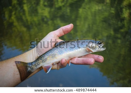Brook Trout (Salvelinus fontinalis). A popular sport fish. It is native to Eastern North America.