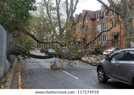 BROOKLYN, NY - OCTOBER 30: Fallen tree in the Sheapsheadbay neighborhood due to flooding from Hurricane Sandy in Brooklyn, New York, U.S., on Tuesday, October 30, 2012. - stock photo