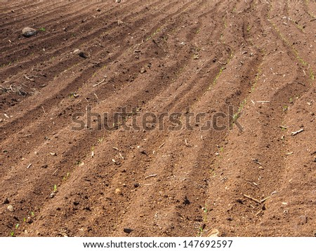 Brown agricultural soil of a field