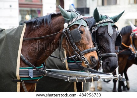 Brown and black horses in Vienna, Austria.