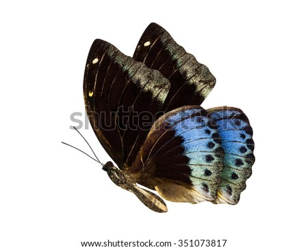 Brown and blue butterfly Hypolimnas monteironis isolated on white background