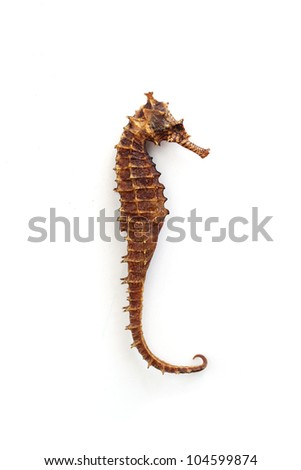 Brown and dried seahorse on a wooden table - stock photo