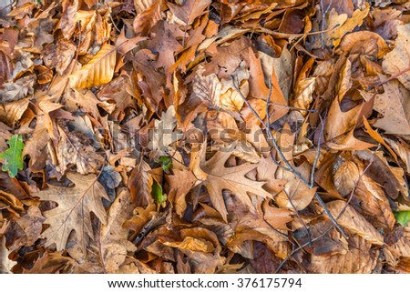 Brown and orange colored beech and oak leaves fallen on the floor in an autumnal forest. The photo was taken from  a bird's perspective. - stock photo