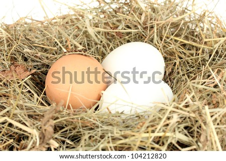brown and white eggs in a nest of hay on white background close-up