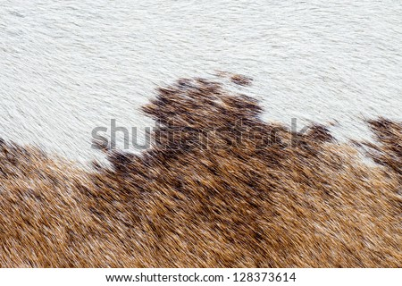 Brown and white fur carpet - stock photo