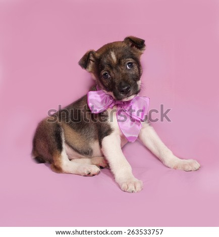 Brown and white puppy with bow sitting on pink background