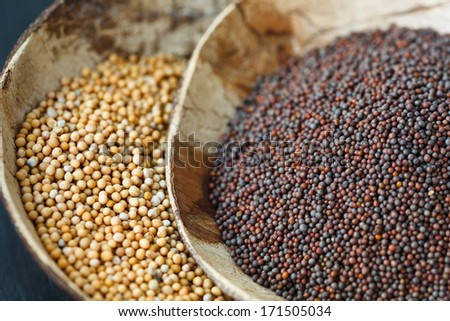 Brown and yellow mustard seeds - stock photo