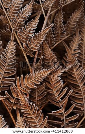 Brown Autumn fern pattern - stock photo