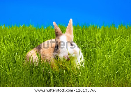 Brown baby bunny on green grass