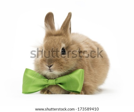 brown baby rabbit with a green bow on white background - stock photo