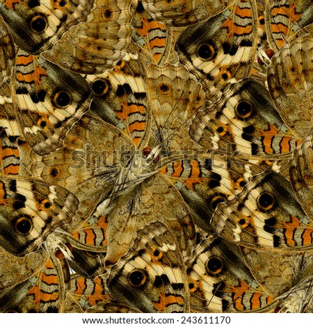 Brown Background Texture made of Blue Pansy Butterflies in a great patterns design - stock photo