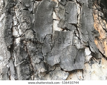 Brown bark of trees