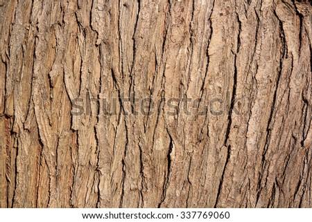 brown bark texture - stock photo
