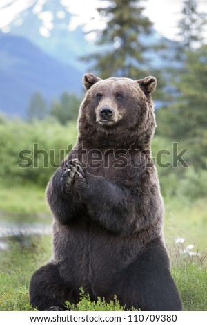 Brown Bear 8 - stock photo