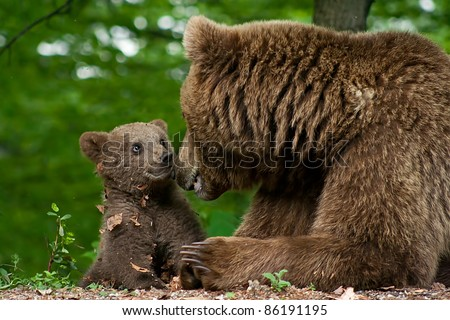 Brown bear and cub - stock photo