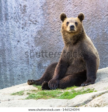 Brown bear cub sitting and looking into the camera - stock photo
