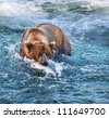Brown bear fishing in Alaska - stock photo