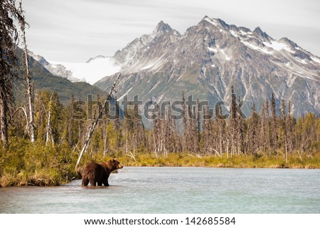 Brown Bear Hunting for Fish Against a Beautiful Alaskan Landscape - stock photo