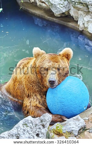 Brown bear in its natural habitat. - stock photo