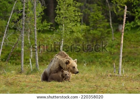Brown bear with cub - stock photo