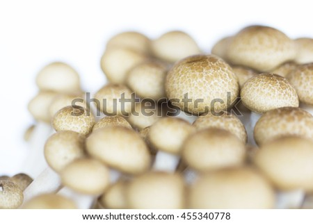 brown beech mushroom isolated on white - stock photo
