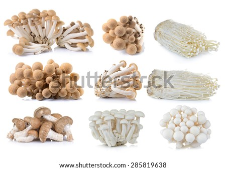 brown beech mushroom , White beech mushrooms , Shiitake mushroom,  Enoki mushroom on white background - stock photo