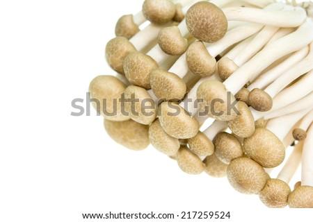 Brown beech mushrooms, Shimeji mushroom, Edible mushroom isolated on white background  - stock photo