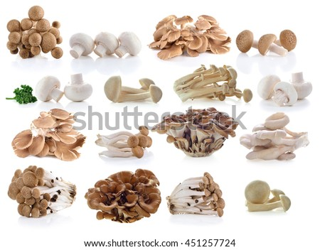 Brown beech mushrooms, Shimeji mushroom, Edible mushroom isolated on white background - stock photo
