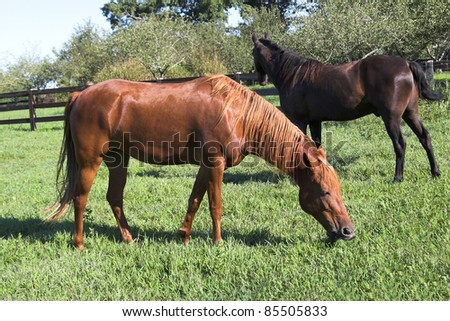 Brown & black horses in wood fenced pasture land