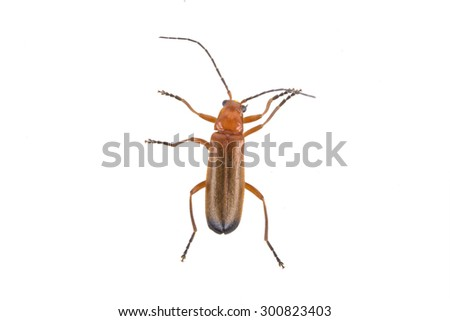 Brown bug on a white background
