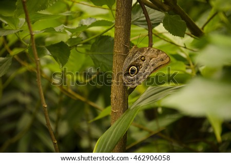 Brown butterfly on a tree