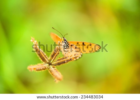 Brown butterfly on brown flower grass - stock photo