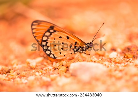 Brown butterfly on brown sand - stock photo