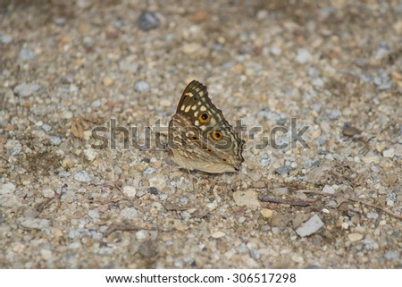 Brown butterfly on floor. - stock photo