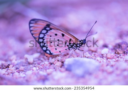 Brown  butterfly on sand beach   - stock photo