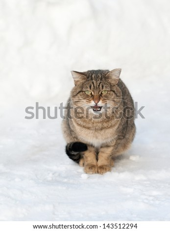 brown cat is sitting on the white snow